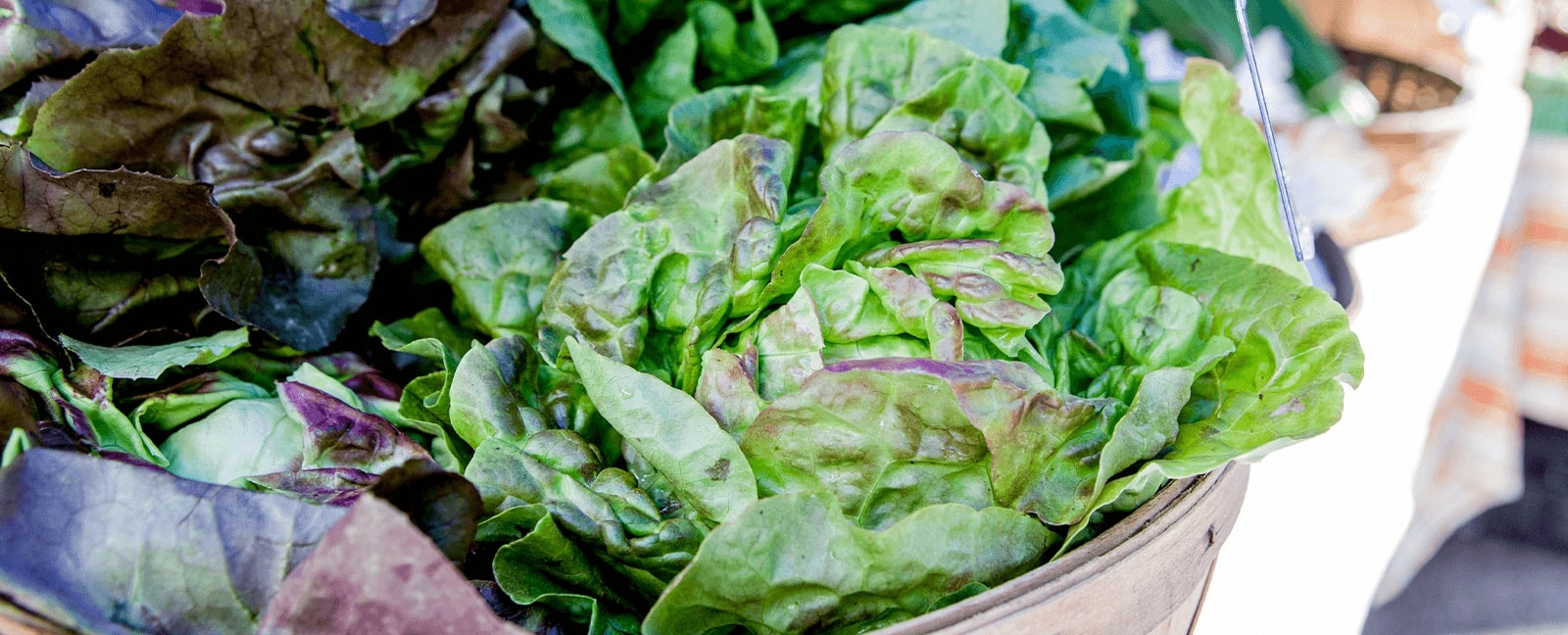 Fresh lettuce in baskets at a Kitchener Market vendors' stall.